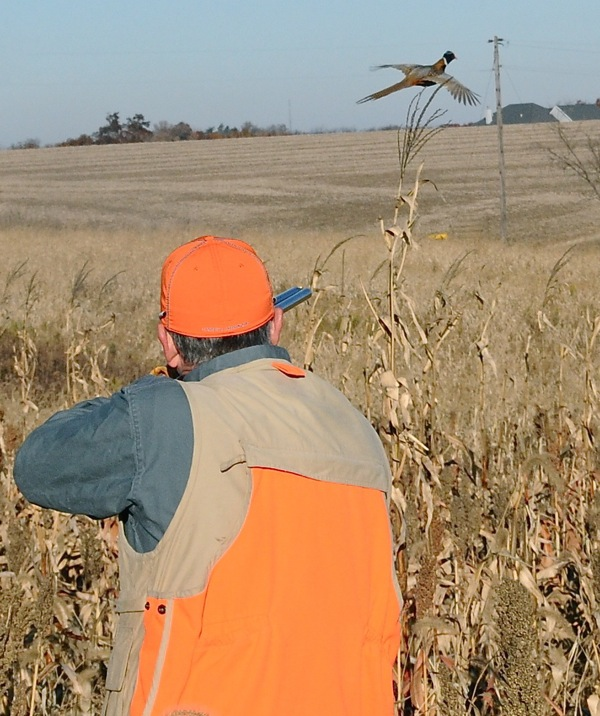 If You Want To Hunt Late-Season Pheasants….