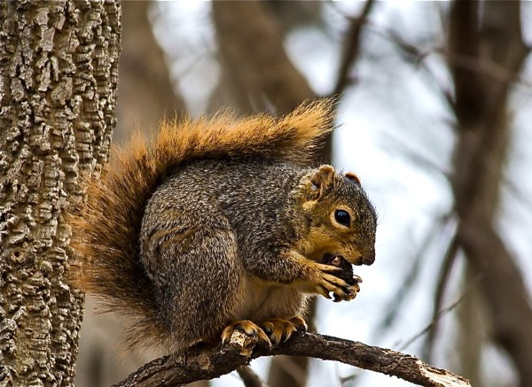 Lessons From The Squirrel Woods…With Dad