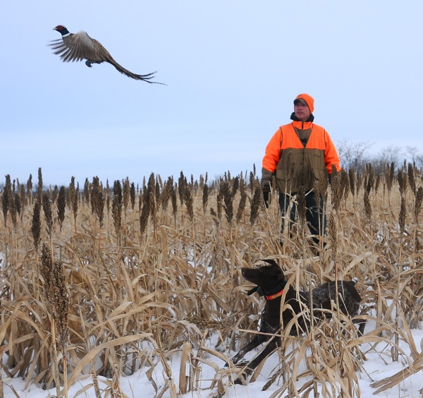 Field Notes:  A Pleasant Pheasant Forecast From Jim Abrams…