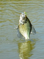 Summer Fishing:  Uncle Mel Nabs The Game Warden….